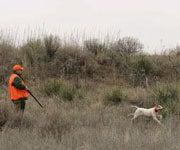 Some Texas Quail Hunters Throwing In The Towel This Season