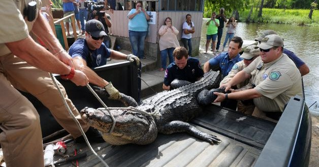 Remains of Missing Texas Man Found Inside Alligator