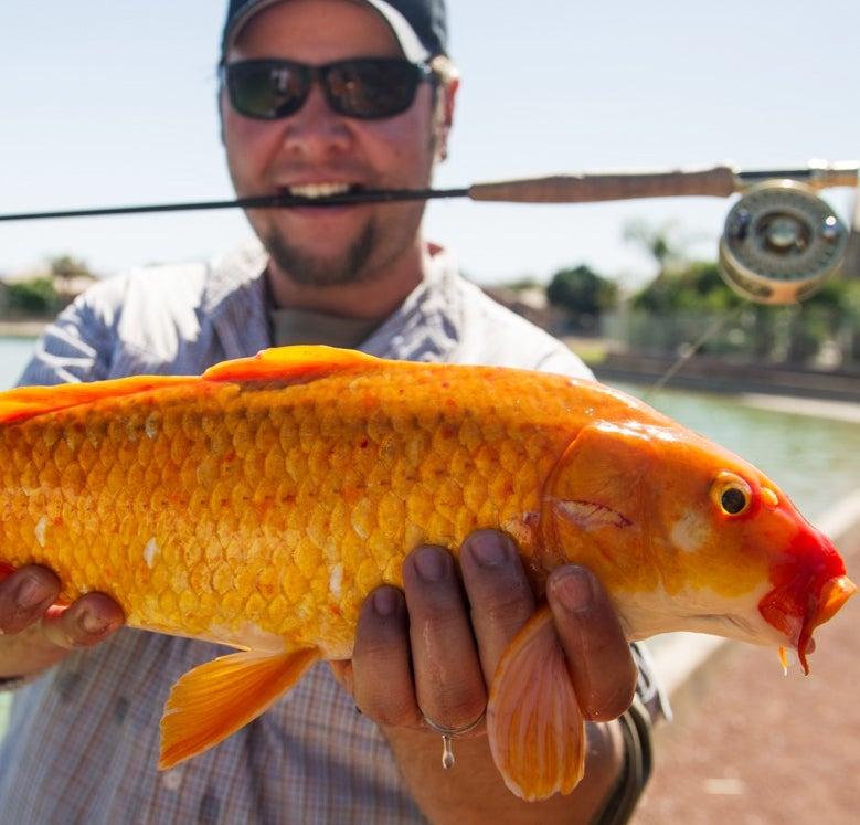 F&S Hook Shots, Episode 1, Season 6: Arizona Bass, Goldfish, and Other Desert Weirdness
