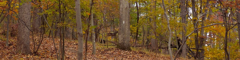 Deer Season Takes Off