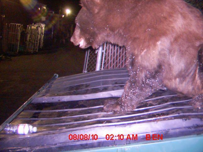 httpswww.fieldandstream.comsitesfieldandstream.comfilesimport2011importPhotoGallery2011contest_entry54800Pioneer_Dumpster_Bear.jpg