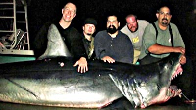 1,000-Pound Mako is California's Pending State Record