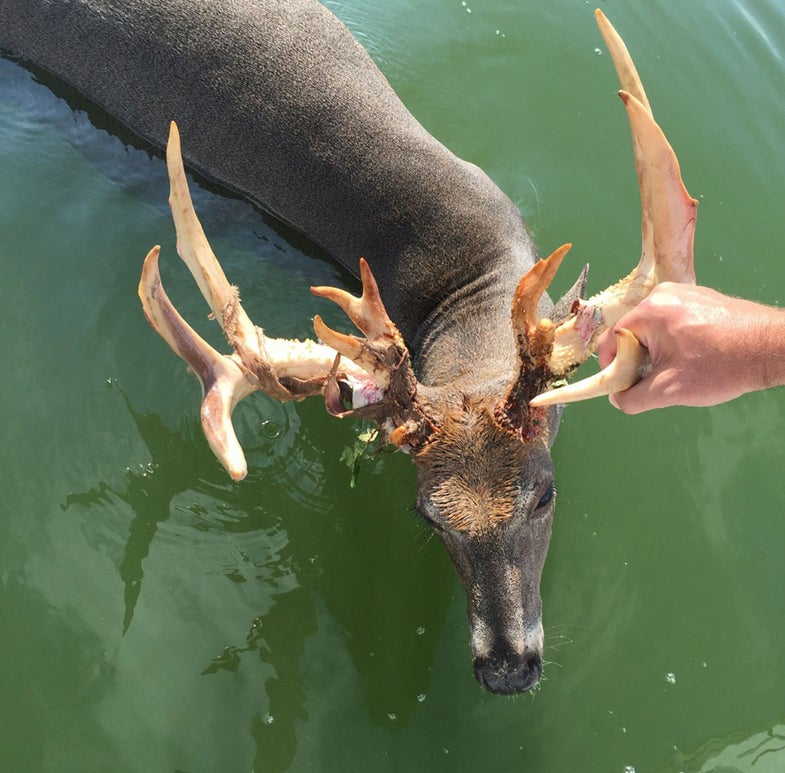 Pontoon Driver Charged After Drowning Buck in Minnesota Lake