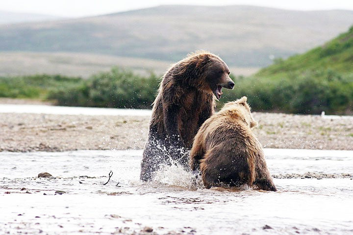 Photos From a F&S Reader: Alaskan Grizzly Fight