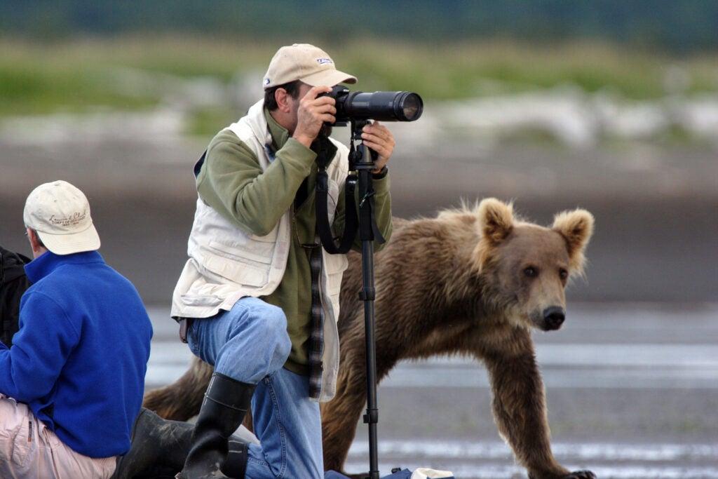 httpswww.fieldandstream.comsitesfieldandstream.comfilesimport2014importImage2011photo38356BARM_BearWars_Alaska_EXCL_026.jpg