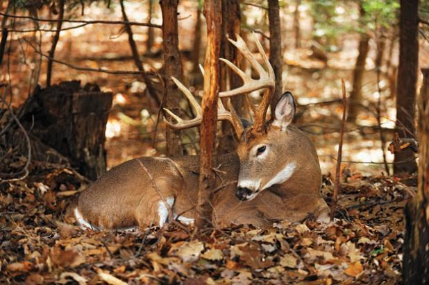 Why Early Spring is the Best Time to Scout for Whitetail Deer