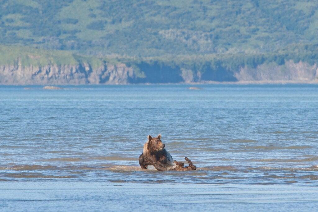 httpswww.fieldandstream.comsitesfieldandstream.comfilesimport2014importImage2011photo38356BARM_BearWars_Alaska_EXCL_010.jpg