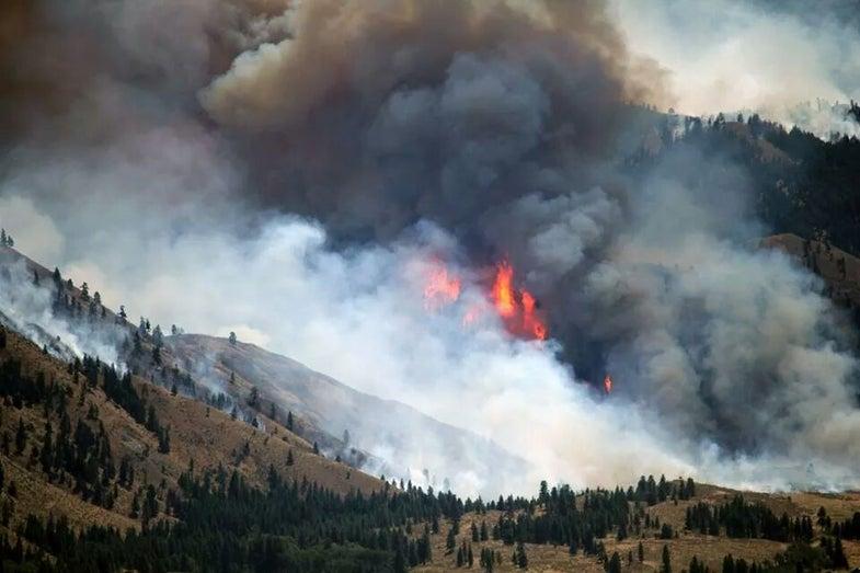 Wildfires Threaten Washington State's Largest Mule Deer Herd