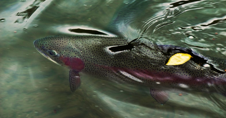 Fish Sense: 25 Tips That'll Put You Into More Trout