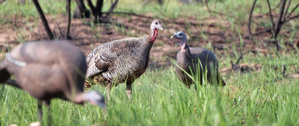 turkey distance