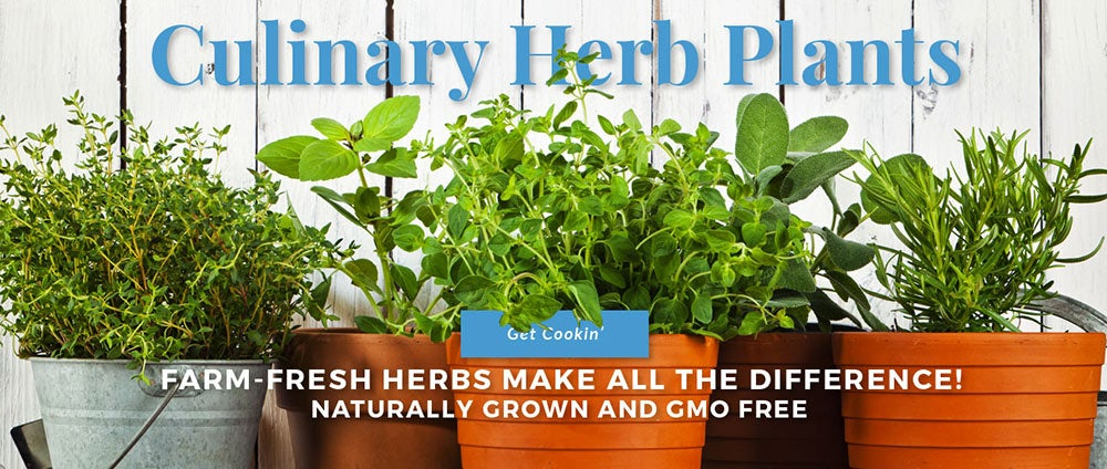 Grower's Exchange—Mail Order Fresh Herbs