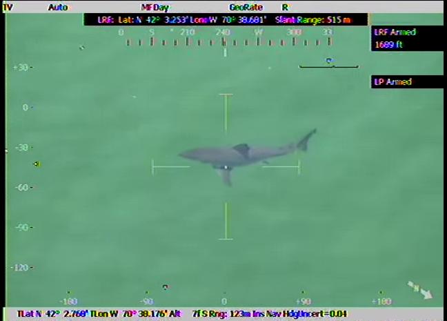 Shark Attack: Great White Flips Two Kayakers in Massachusetts