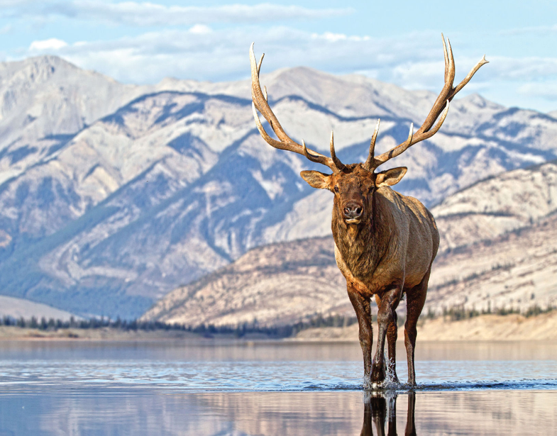 31 Incredible Hunting and Fishing Photos From Field & Stream