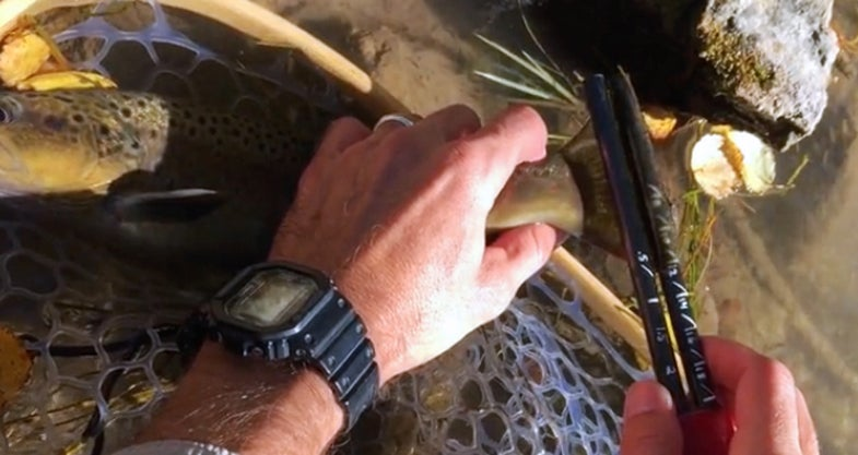 An Entirely New Way to Measure Fish