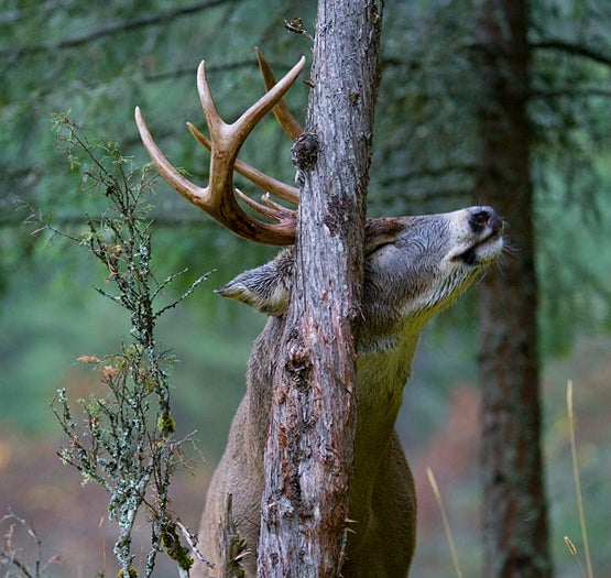 How to Read a Rub and Find a Buck Fast