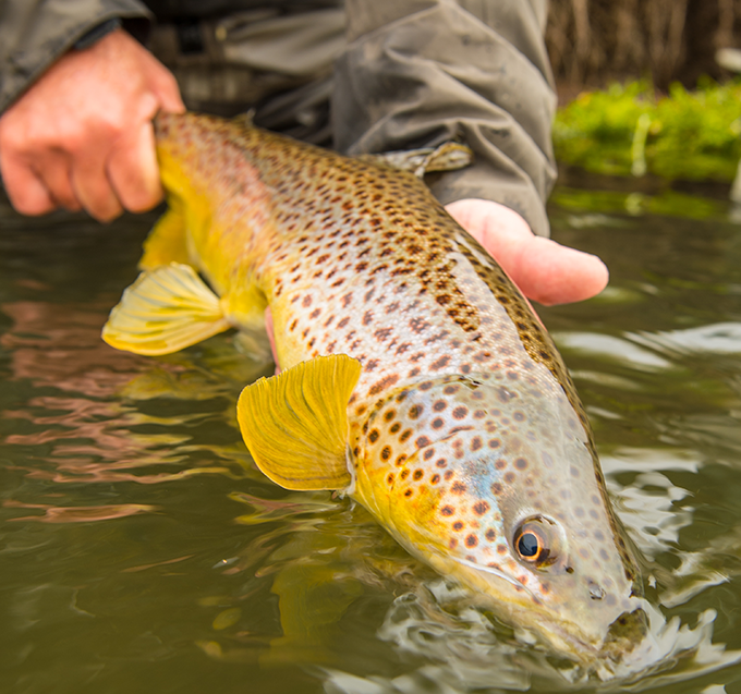 How to Pick the Perfect Two-Fly Trout Rig