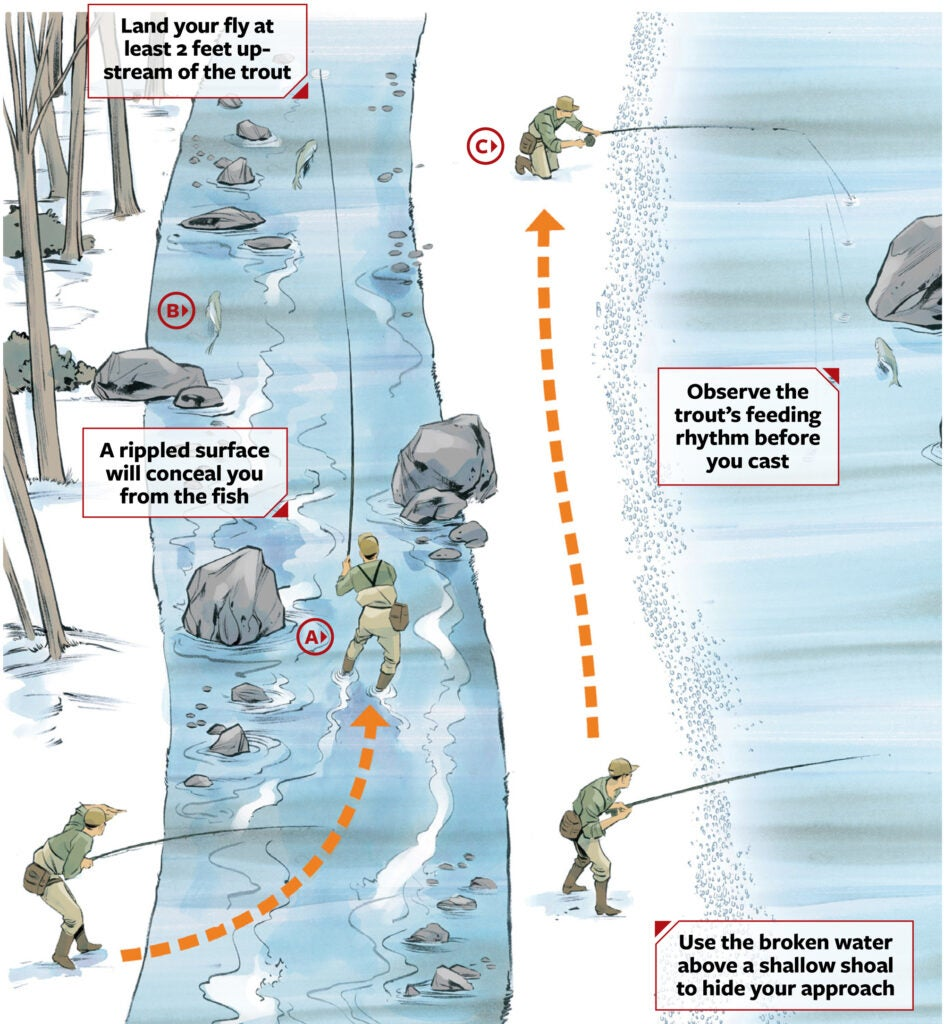 stalk trout