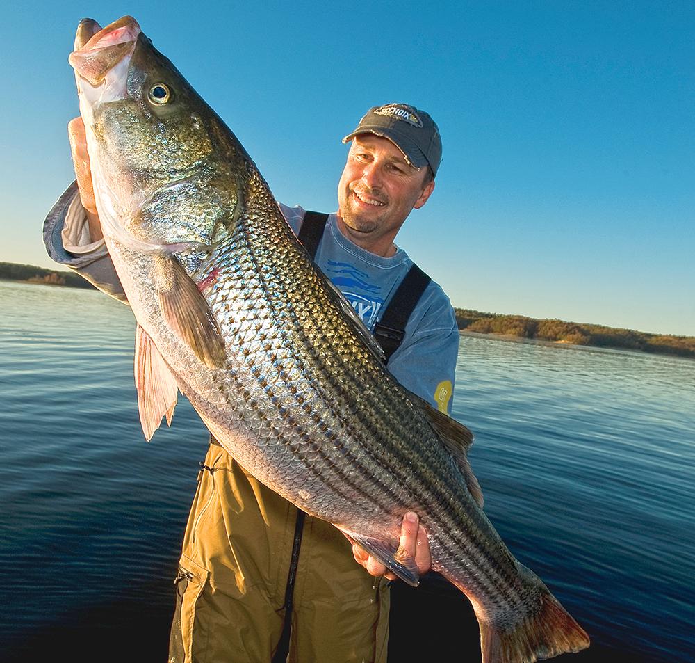 striped bass fishing, fishing, stripers, bass fishing,