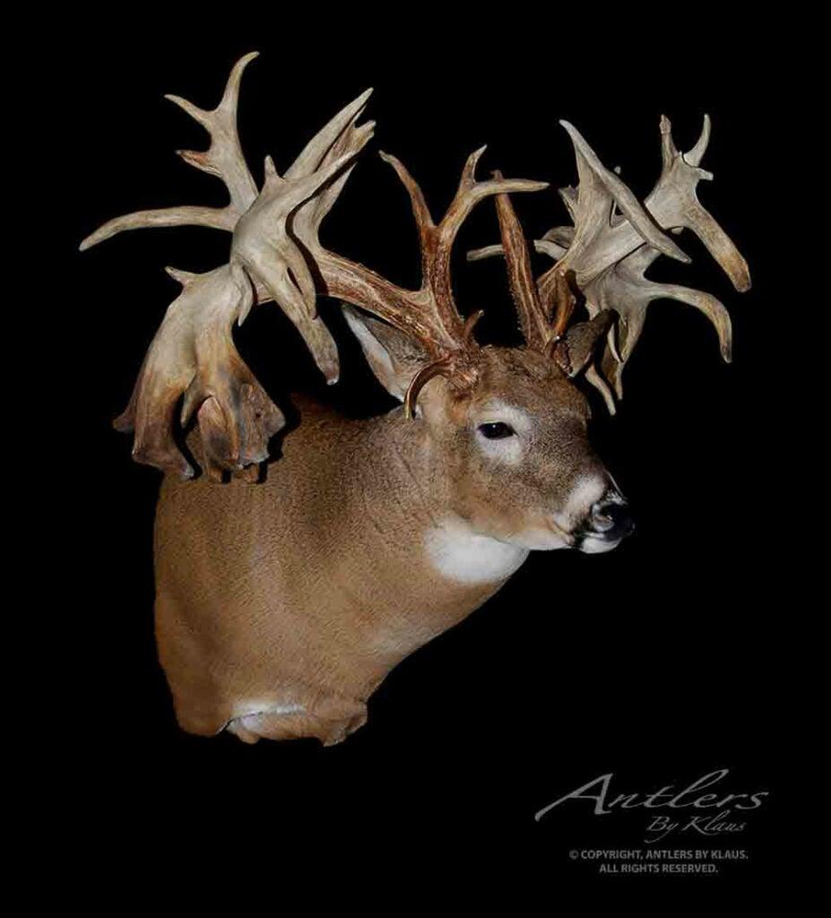 World Record Deer