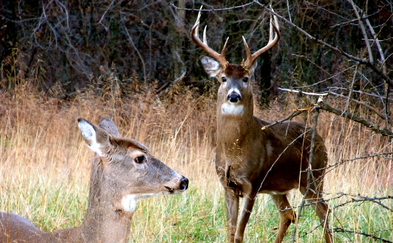 National Summary: The Clock Is Ticking on the 2015 Rut