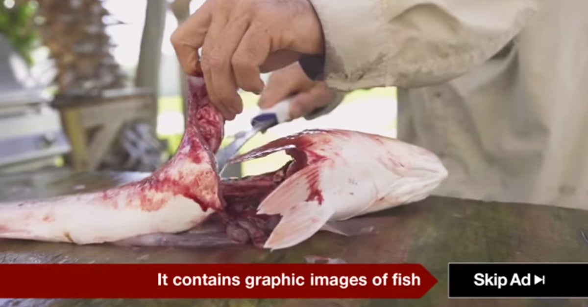 YouTube Bans Provocative Hunting and Fishing Ads