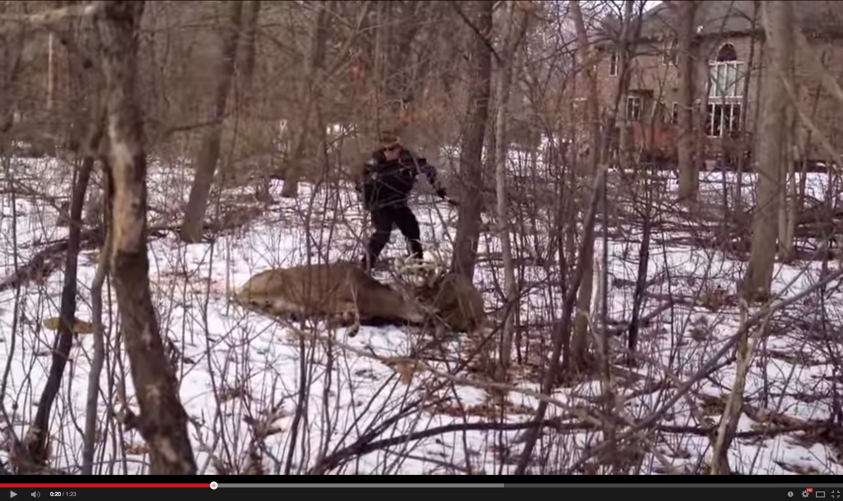 Video: Cop Tasers Locked Buck