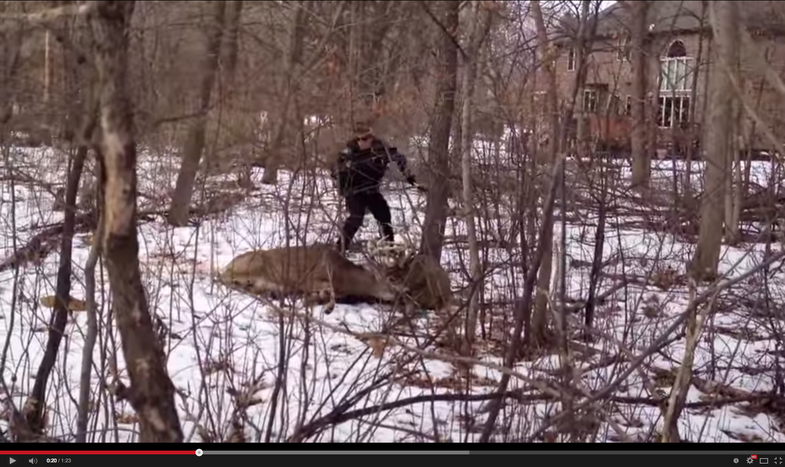 Video: Cop Tasers Locked Buck