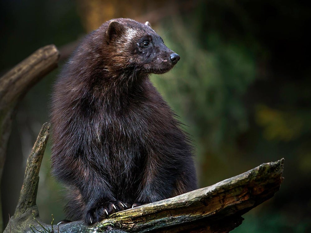 Poachers Charged in Minnesota's Largest Illegal Trapping Bust