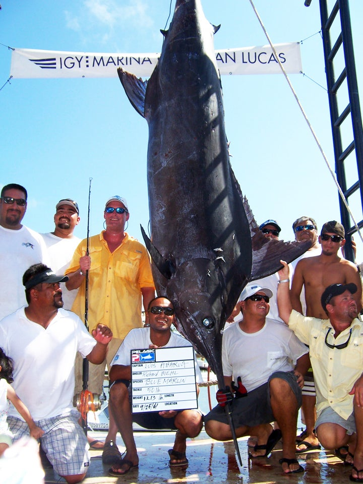 Record Marlin Causes Chaos in Cabo