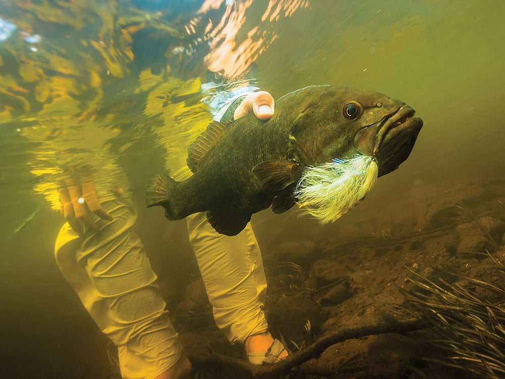 Upsize your streamers to entice giant smallies while steering clear of attacks from little fish