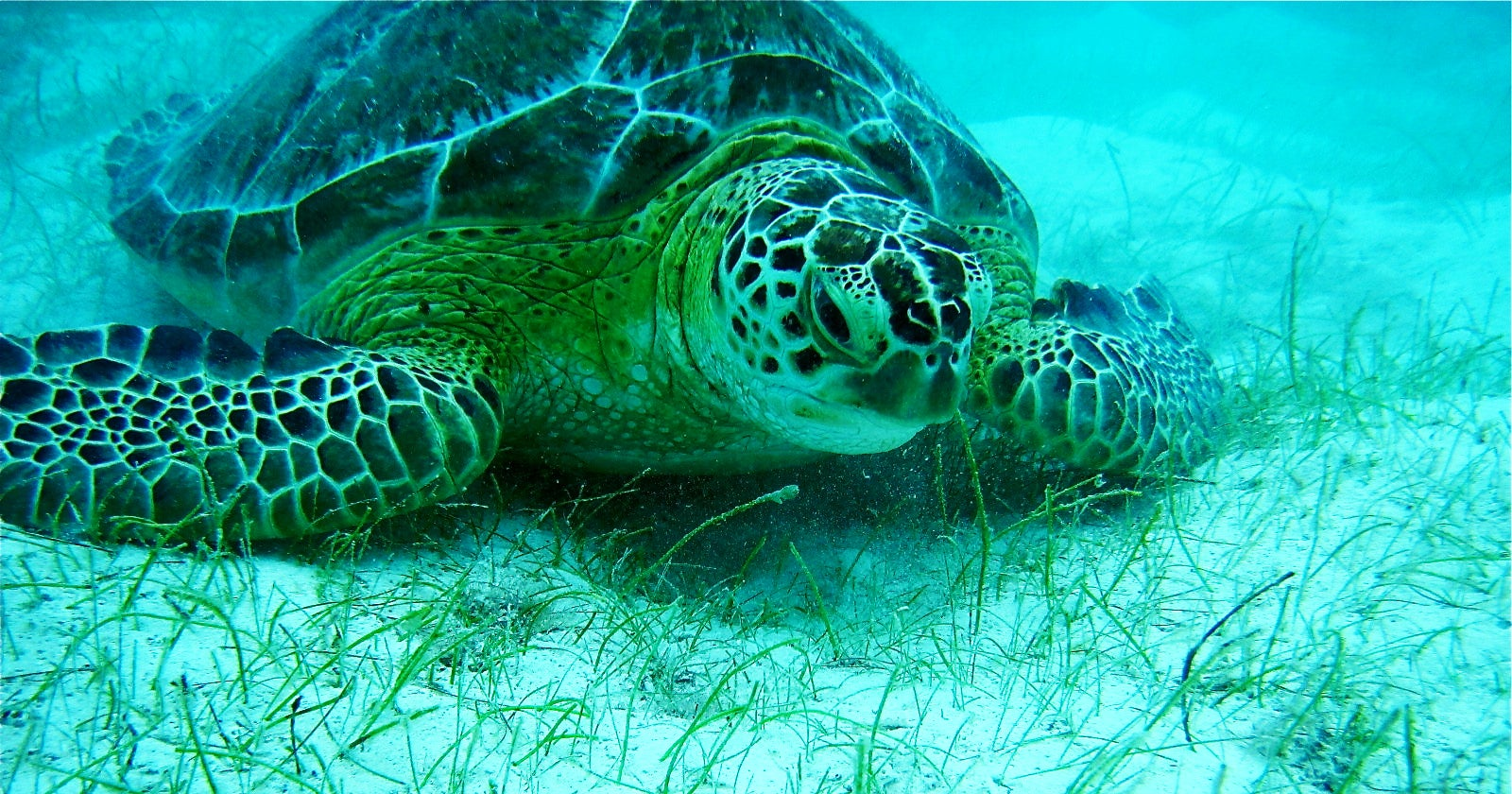 sea turtle, sea turtle eggs, 3-D printers,