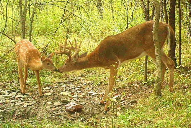 Best Photos from the 2012 Field & Stream Fall Trail Cam Contest