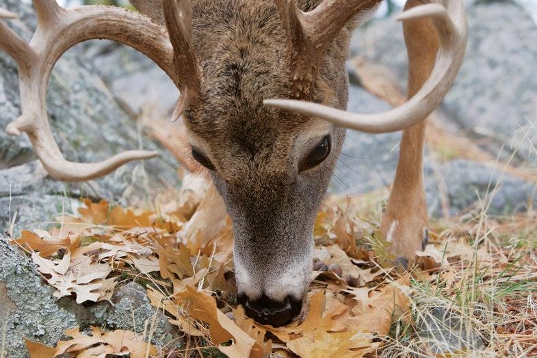 How to Ambush Bucks on a Bench
