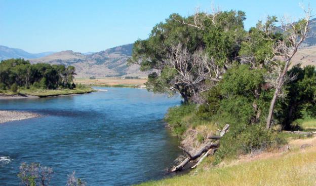 Yellowstone Fish Kill a Warning Sign of the Future