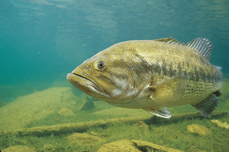 Spring Fishing: 10 Tips to Catch Spawning Bass