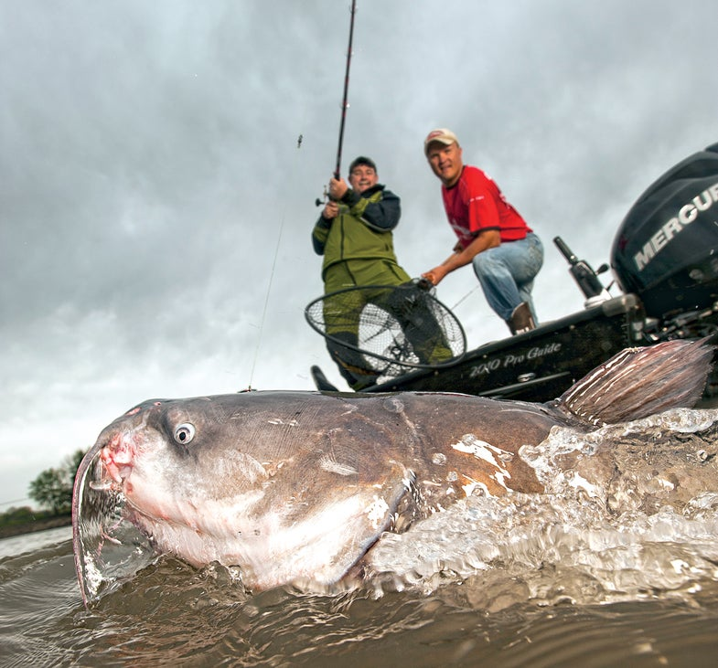 Never Lose Another Blue Catfish