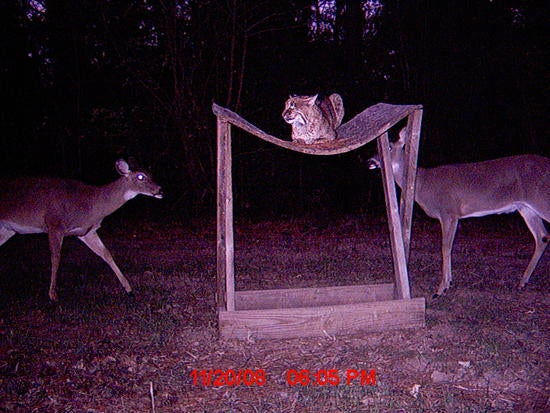 Trail Cam Bloopers: Funny and Unusual Trail Cam Photos From Our 2008 Trail Cam Contest