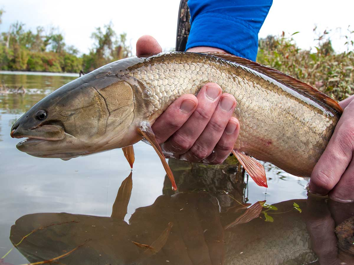 bowfin fishing, fishing tips, bass fishing