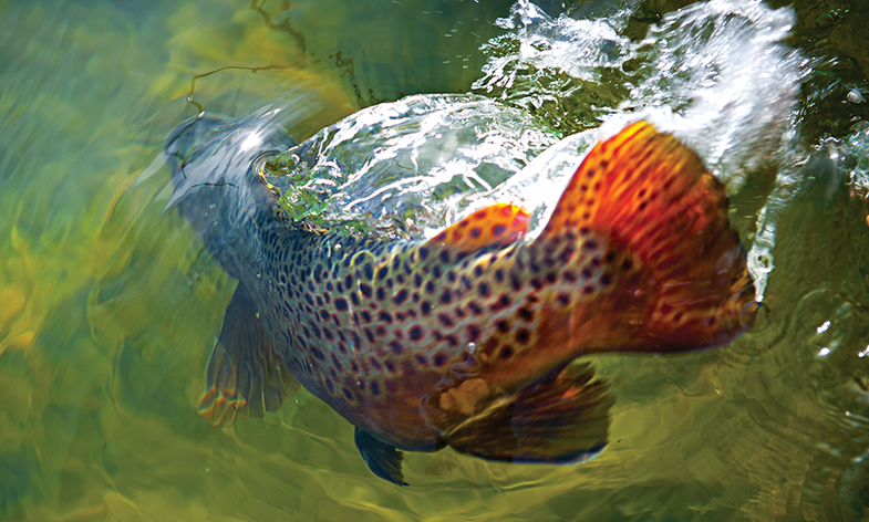 How to Catch Monster Trout