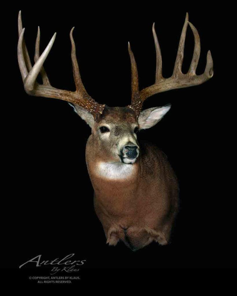World class deer
