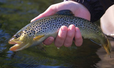 trout in a man's hand