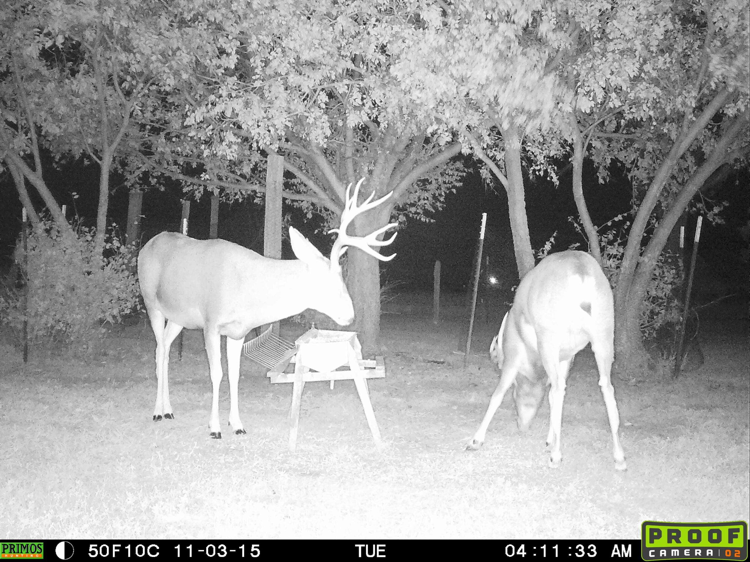 Hunting Strategies for a Vampire Mule Deer Buck