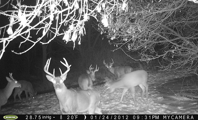 Winter Trail-Cam Season's Opening Day