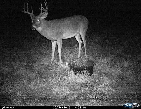 httpswww.fieldandstream.comsitesfieldandstream.comfilesimport2014importBlogPostembedRR-Deer.jpg