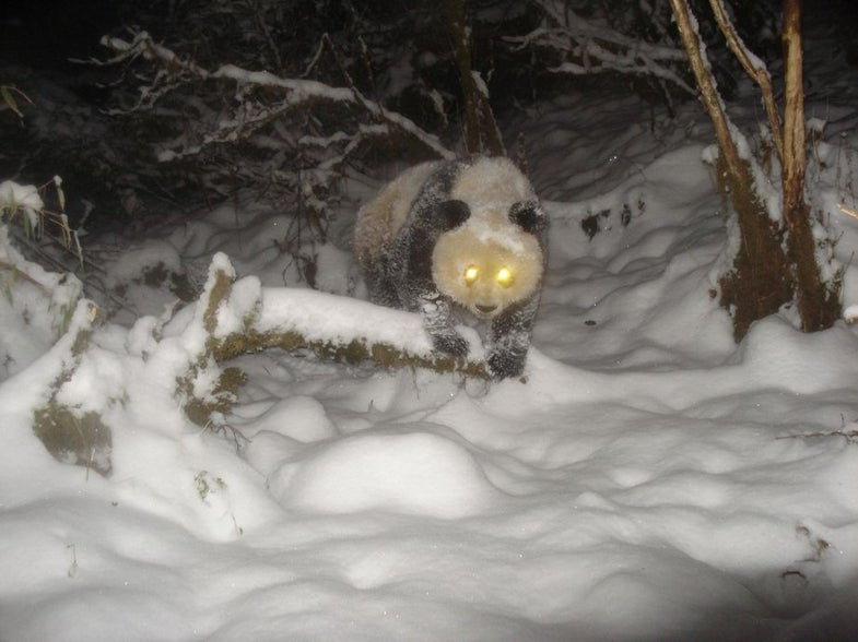 Smithsonian Trail Cam Gallery: 100 Photos of Rare, Bizarre and Just Plain Cool Critters From Around The World