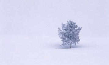 Get Winterized