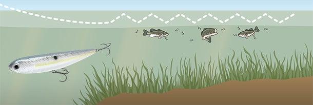 Last Grass Bass: Catch Big, Late-Season Largemouths Over Subsurface Vegetation