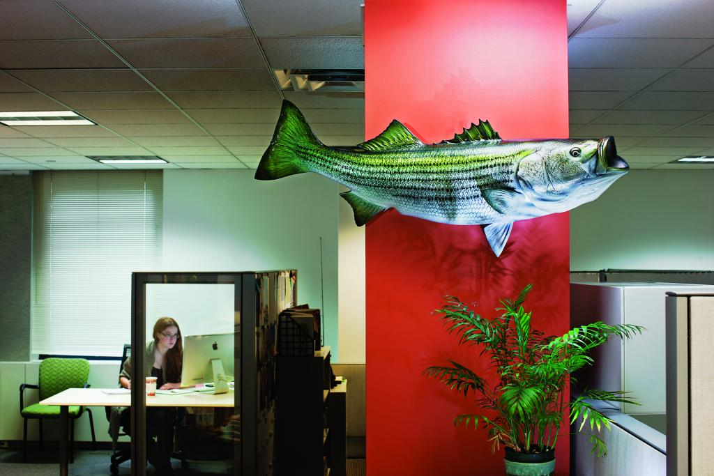 Freak Out a Skipjack for a Striped Bass Wall-Hanger