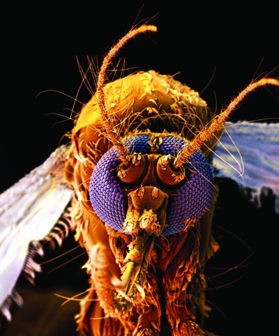 Bug Off: Boy Scouts Put 4 Insect Repellents to the Test