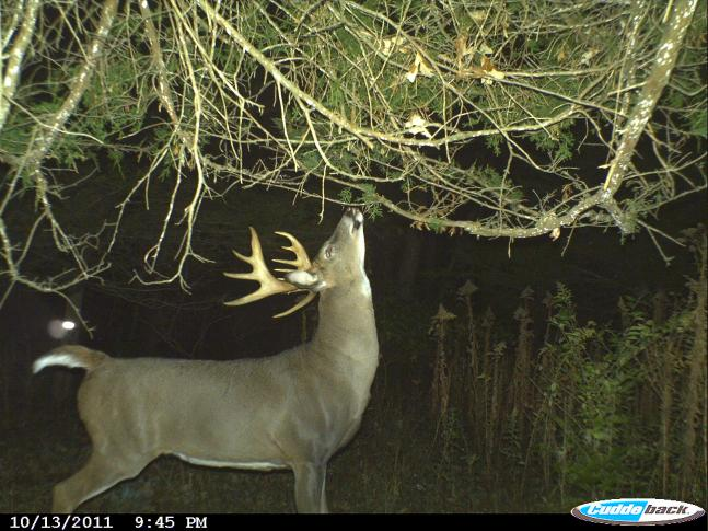 The 50 Best Photos From Field & Stream's Fall Trail Cam Contest: Round III